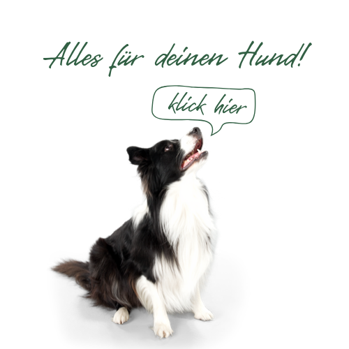 highpoint-button-hund-sprechblase-neu