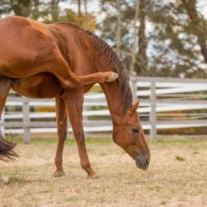 Allergie Pferd