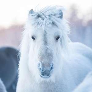 Atemwege Pferd
