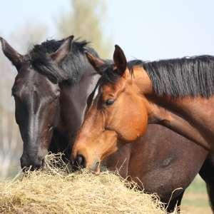 Verdauung / Magen-Darm Pferd