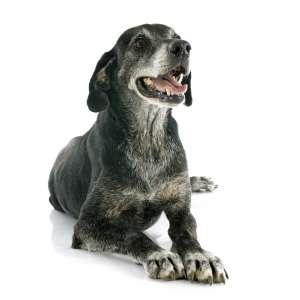 Immunsystem / Senioren Hund